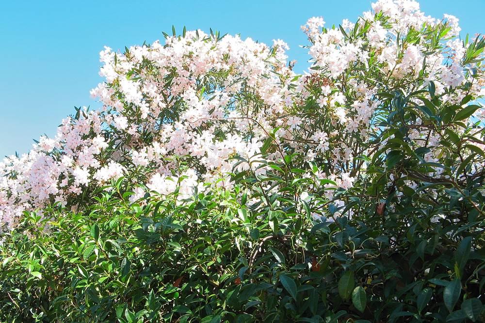 А эти цветы в Марина ди Кампо вам нравятся?
