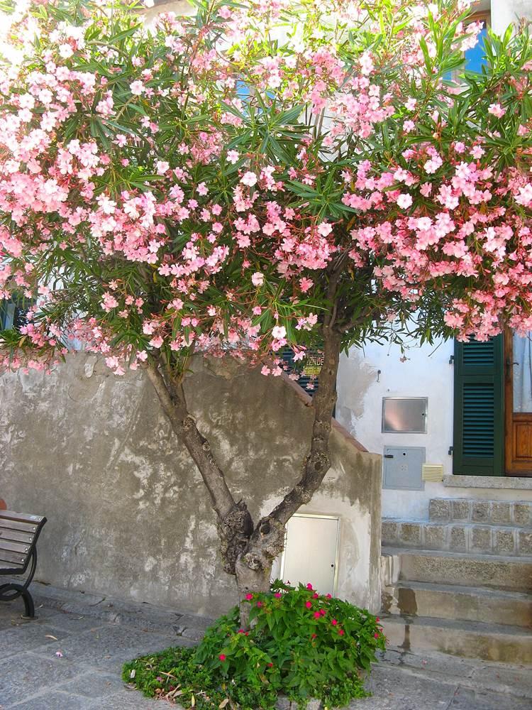 Летом на Эльбе много цветущих растений