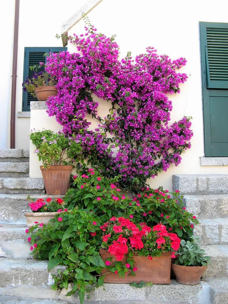 Яркость летних красок
