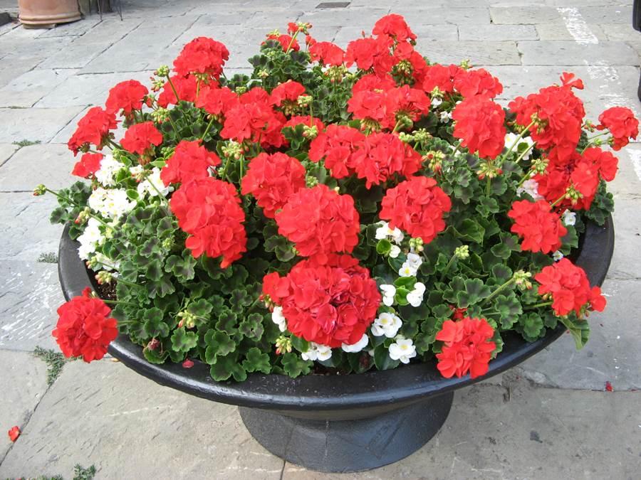вазон с цветами на улице в Поппи