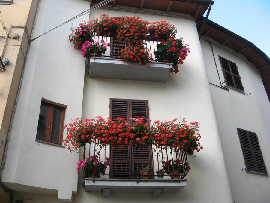 цветы на балконах в Поппи