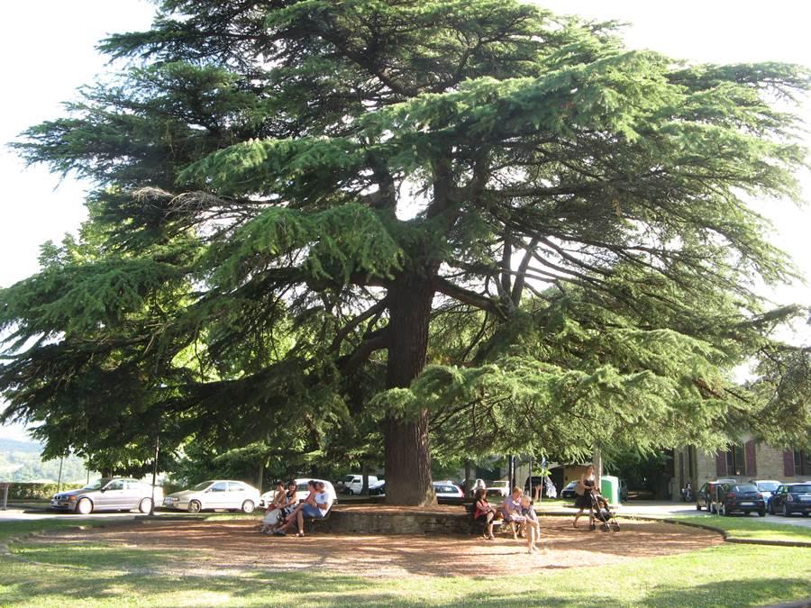 старое дерево рядом с замком