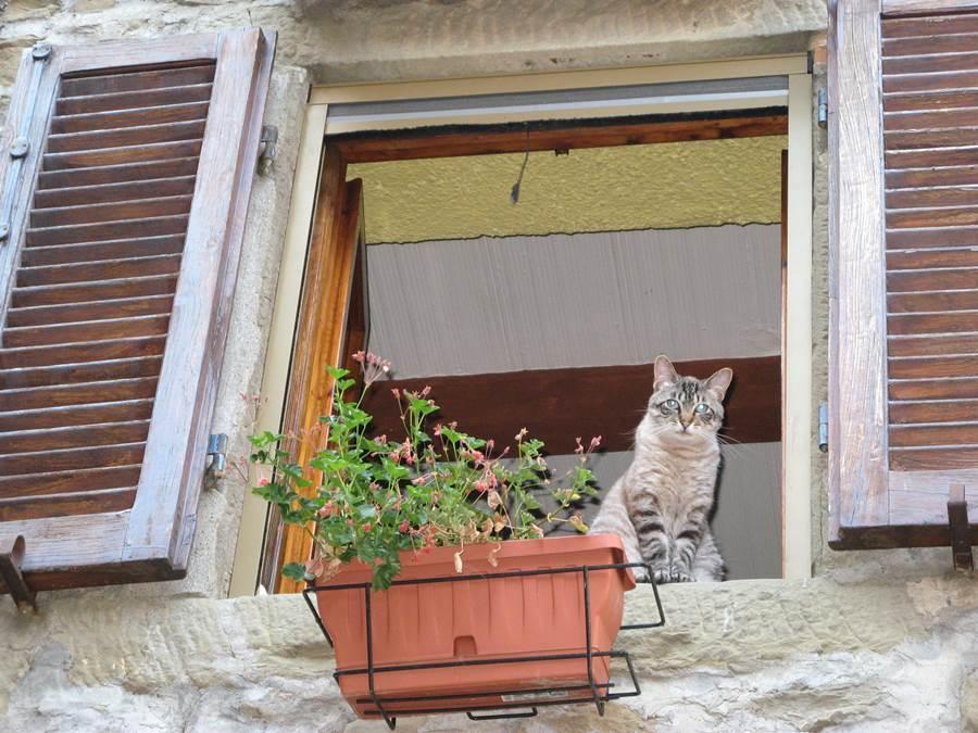 котик из Поппи
