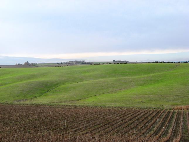 поля и виноградники в Тоскане