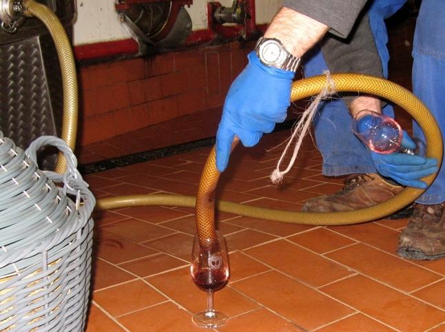 как пробуют вино в Италии