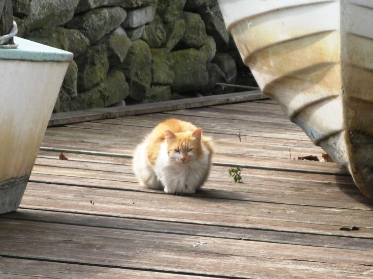 кот-kot
