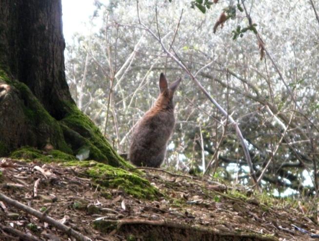 кролик на острове маджоре