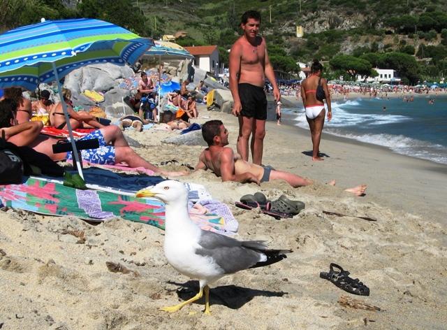 peschanyj-plyazh-na-elbe-kavoli-песчаный-пляж-на-эльбе-каволи