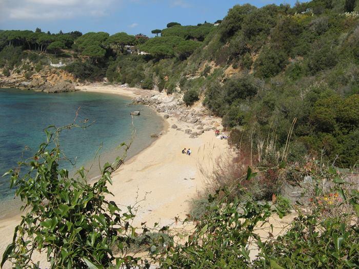растительность вокруг пляжа