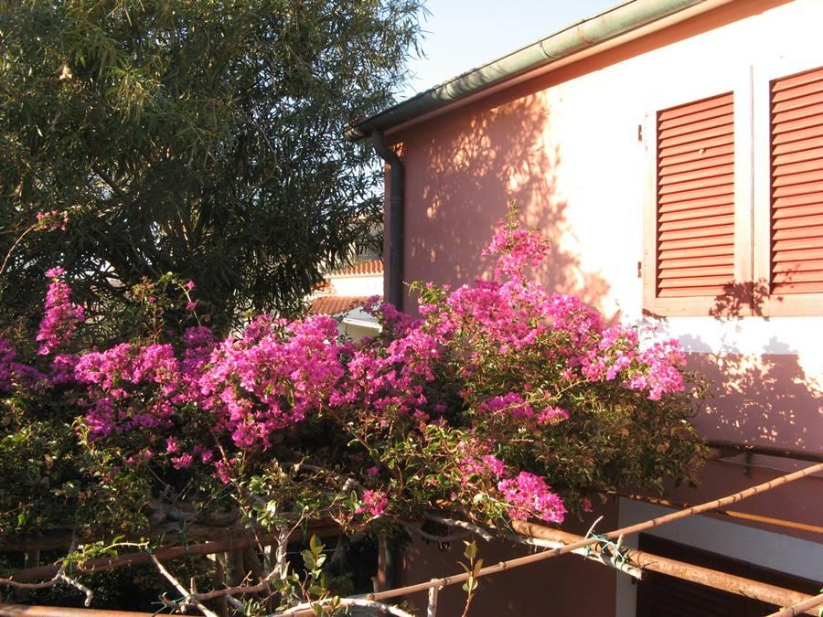 Дом закрыт на зиму, а цветы цветут, радуя прохожих