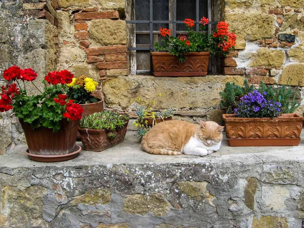 котик из Монтикиелло