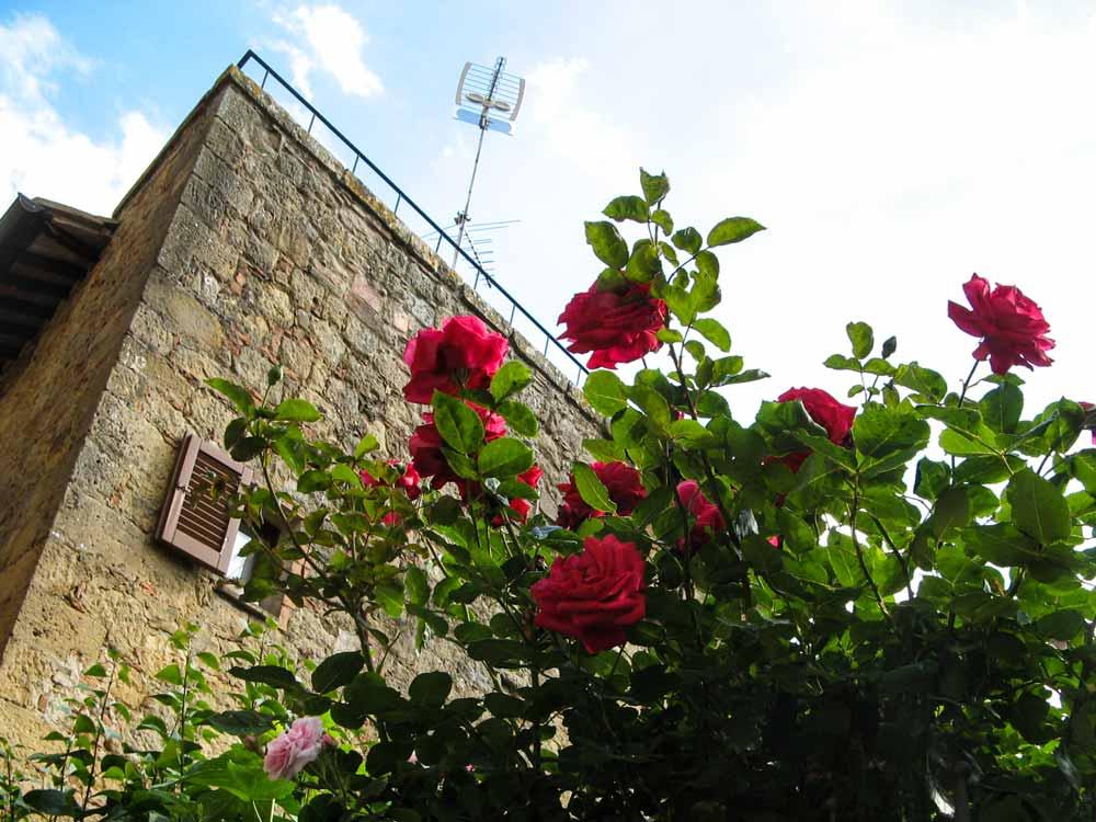 розы возле замка