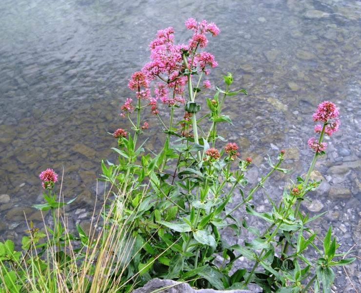 растительность на берегу Изео