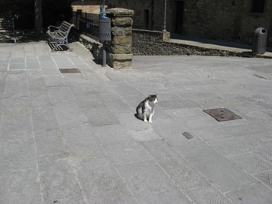 котик в Лучиньяно