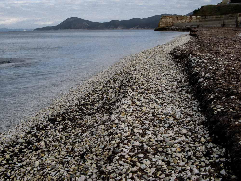 стена из водорослей, выстроенная морскими волнами