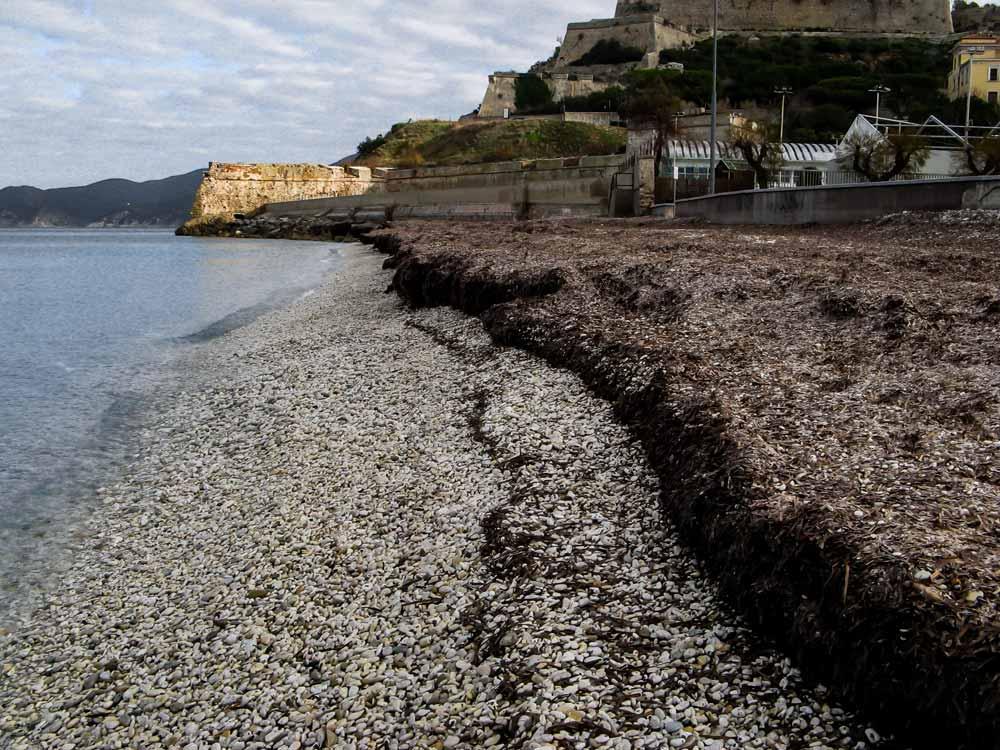 стена из водорослей на зимнем пляже Гиайе