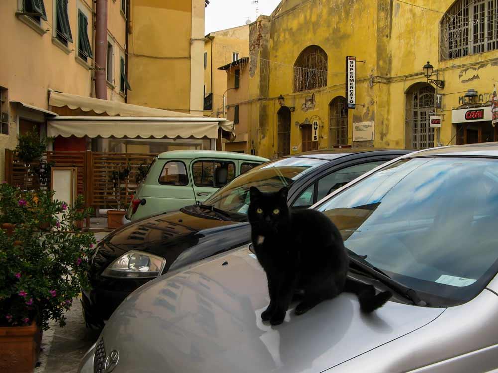 кот на машине