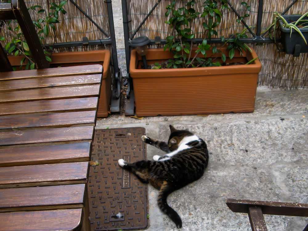 кот на ресторанной площадке