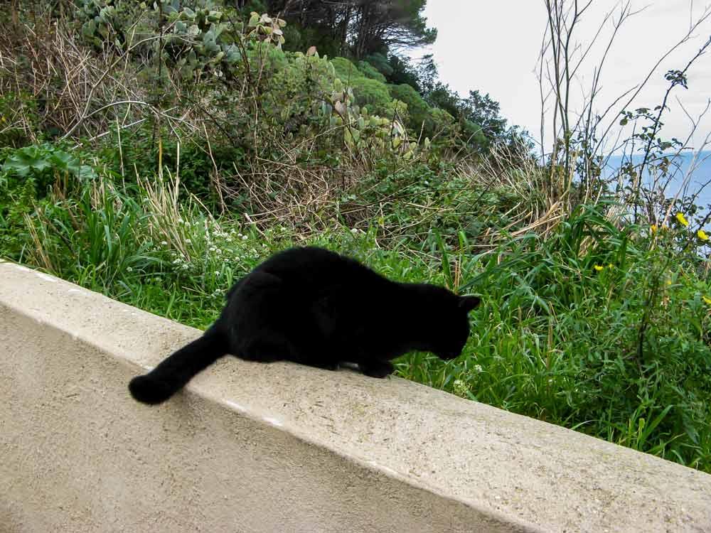 кот выбирает траву для еды
