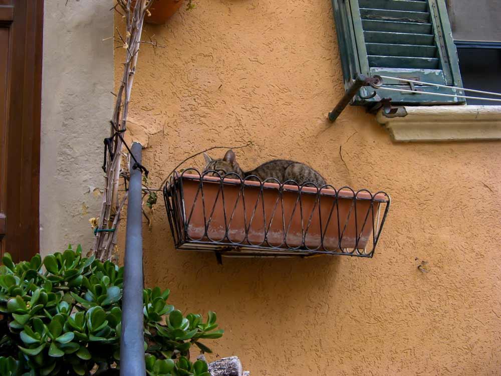 кот отдыхает в вазе для растений