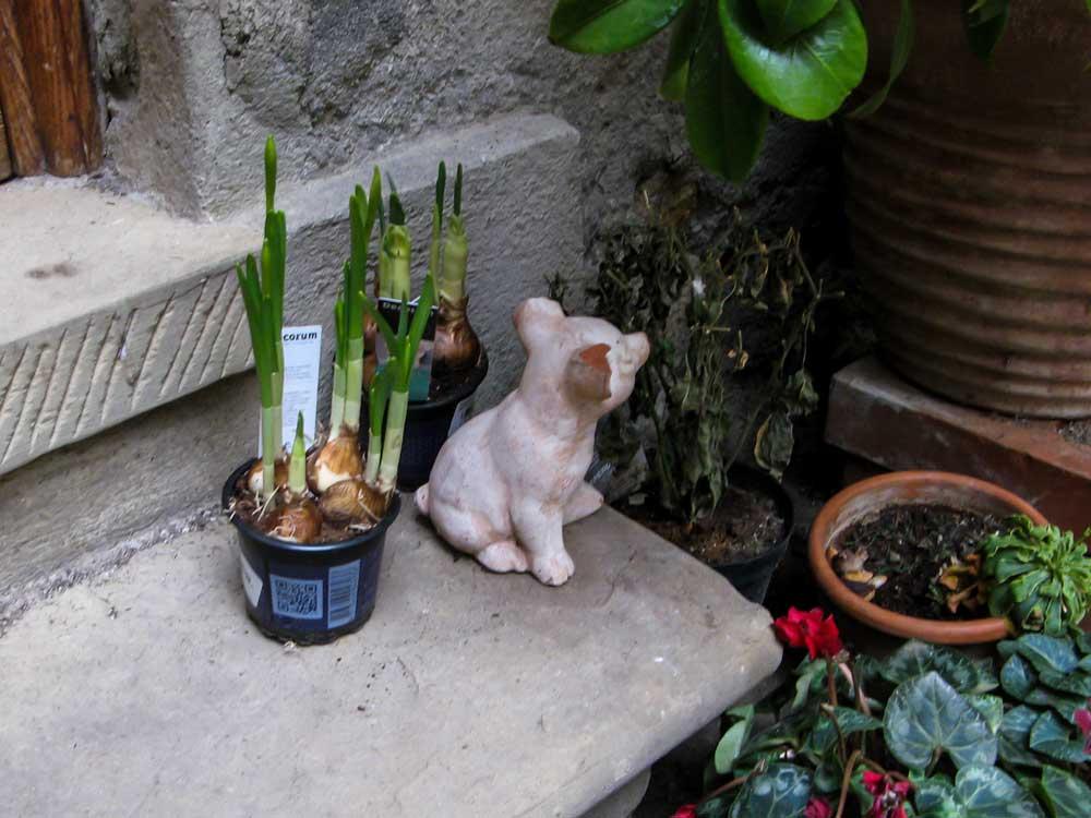 цветы и керамическая собачка на ступеньке