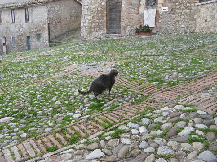 кошка гуляет на городской площади