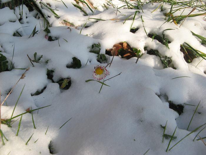 цветочек дрожит от холода
