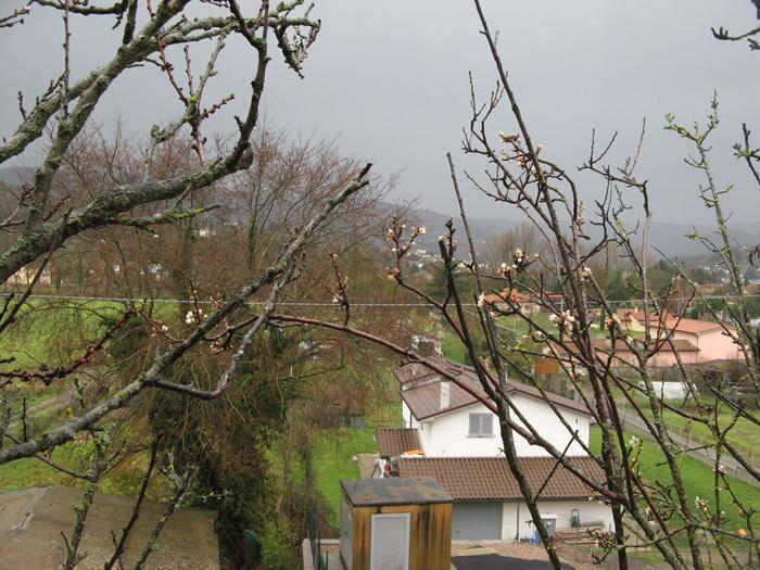 дождь и весна в Италии - цветение