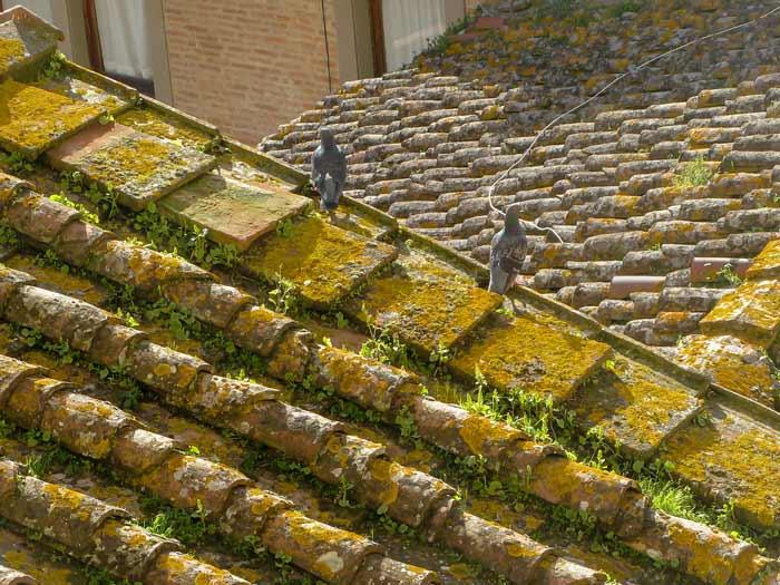 крыши Сан Миниато