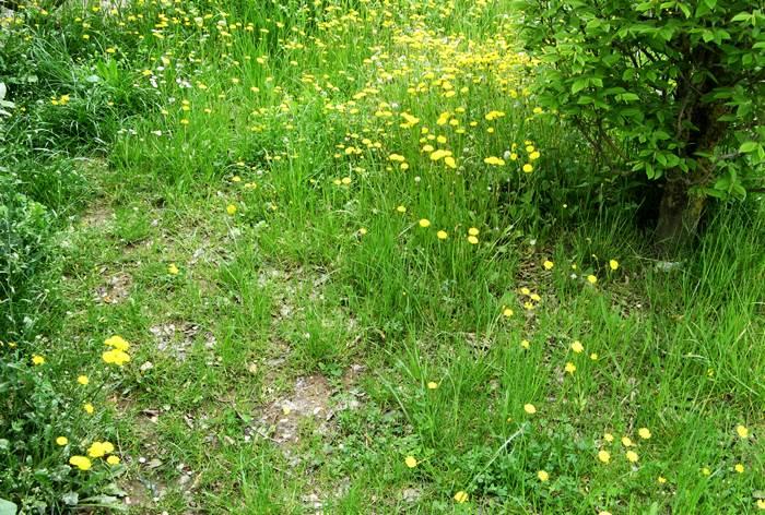 Италия отдых в апреле - зелёная трава и жёлтые цветы
