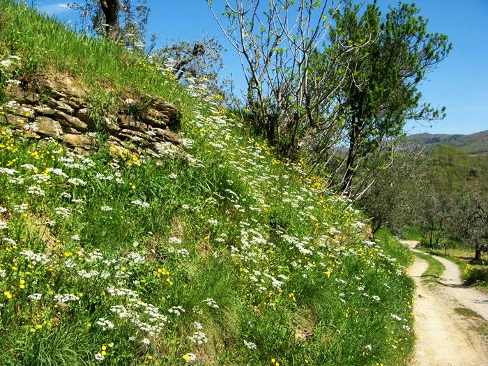 весна в Тоскане - время полевых цветов