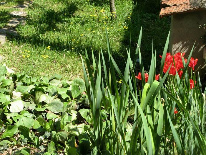 Тоскана весной - цветение тюльпанов