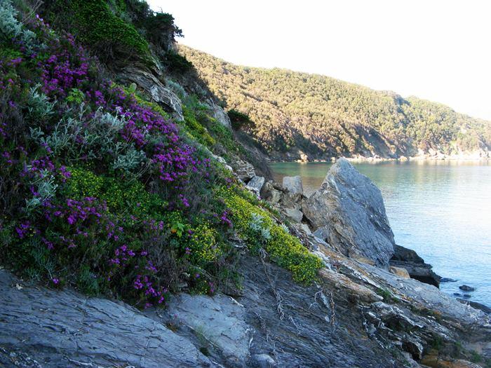 пляж Виттичио на Эльбе - цветение на скалах