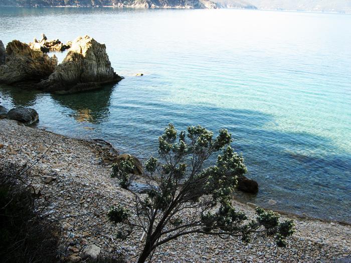 вид на пляж Пинетина из леса