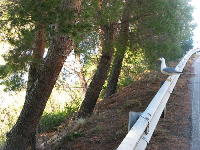 поиск тропы на пляж Пинетина