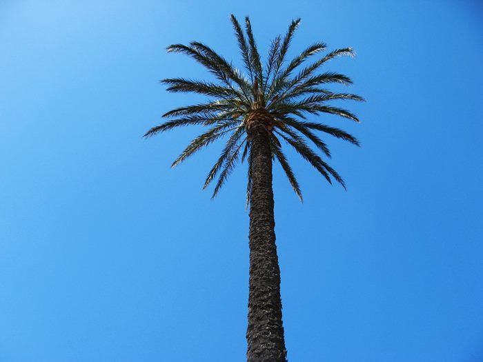 август в Италии - пальма у пляжа