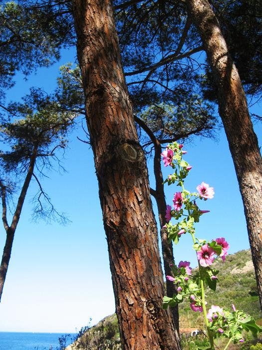 август в Италии - растительность у моря