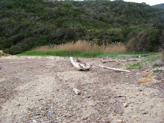 водоросли и брёвна на пляже Ламая на Эльбе