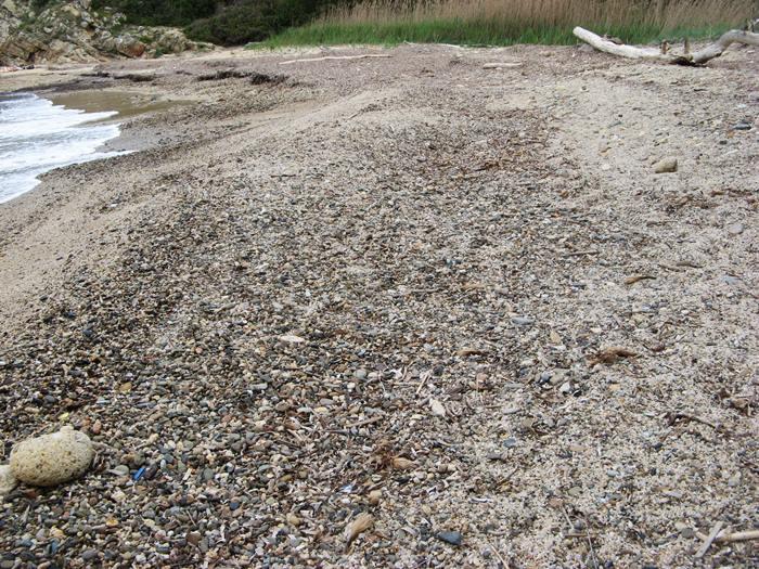 посейдония - водоросли на пляже Ламая на Эльбе