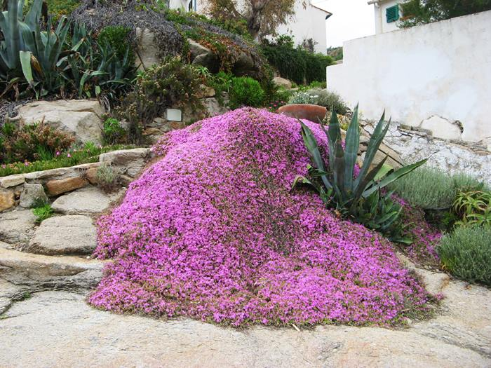 цветы в Киесси