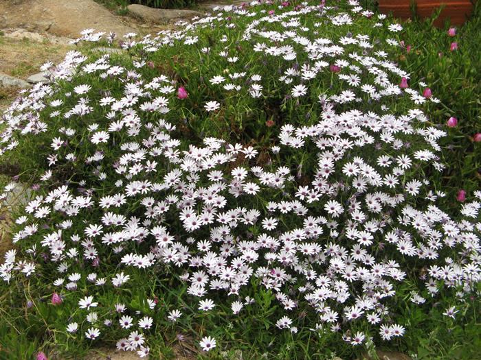 цветение весной в Киесси
