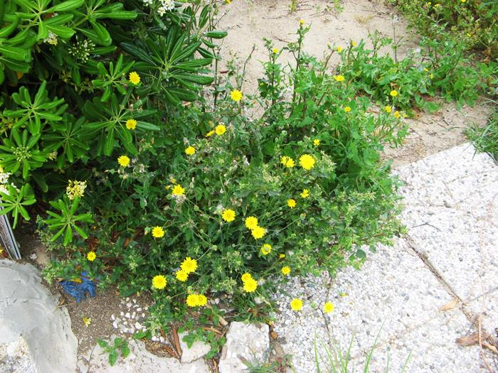 разноцветье в Киесси