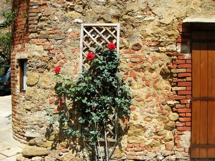 красная роза в Кастельмунцио