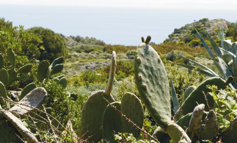 растительность на острове Капрая