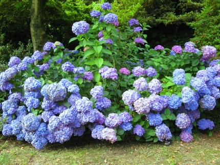 летнее цветение в Италии