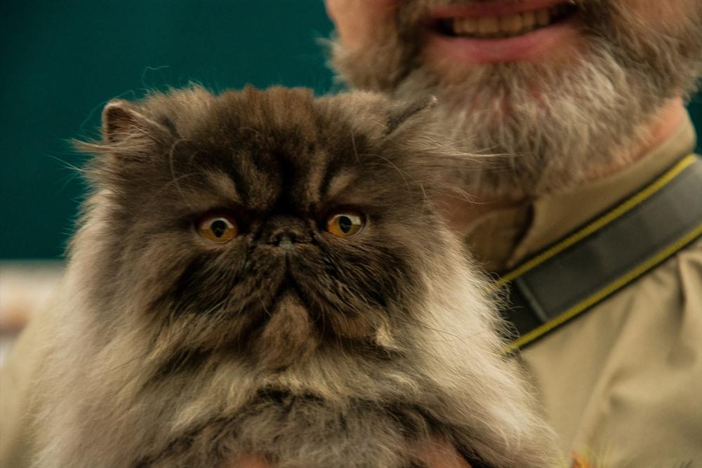 квартирант с кошкой